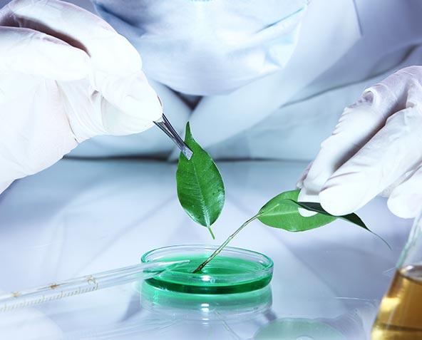 perche-sceglierci-biogenya-test